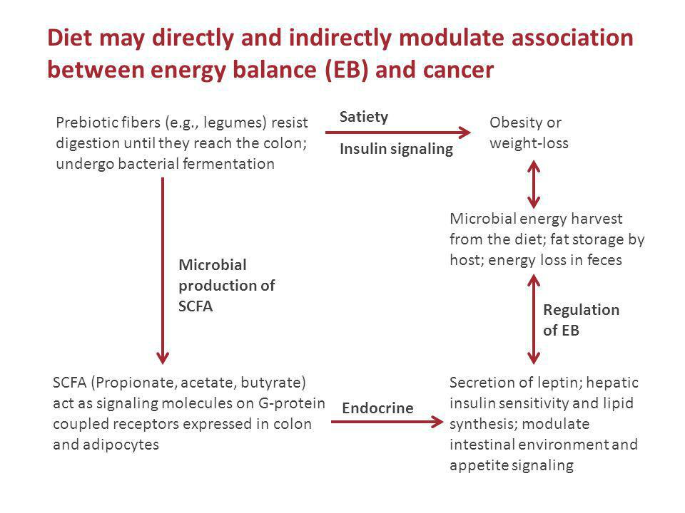 Diet may directly and indirectly modulate association between energy balance (EB) and cancer