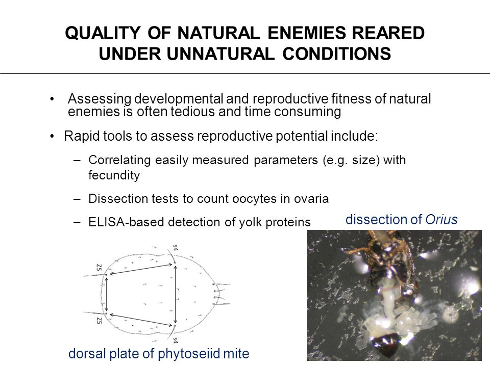 QUALITY OF NATURAL ENEMIES REARED UNDER UNNATURAL CONDITIONS