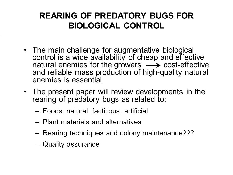REARING OF PREDATORY BUGS FOR BIOLOGICAL CONTROL