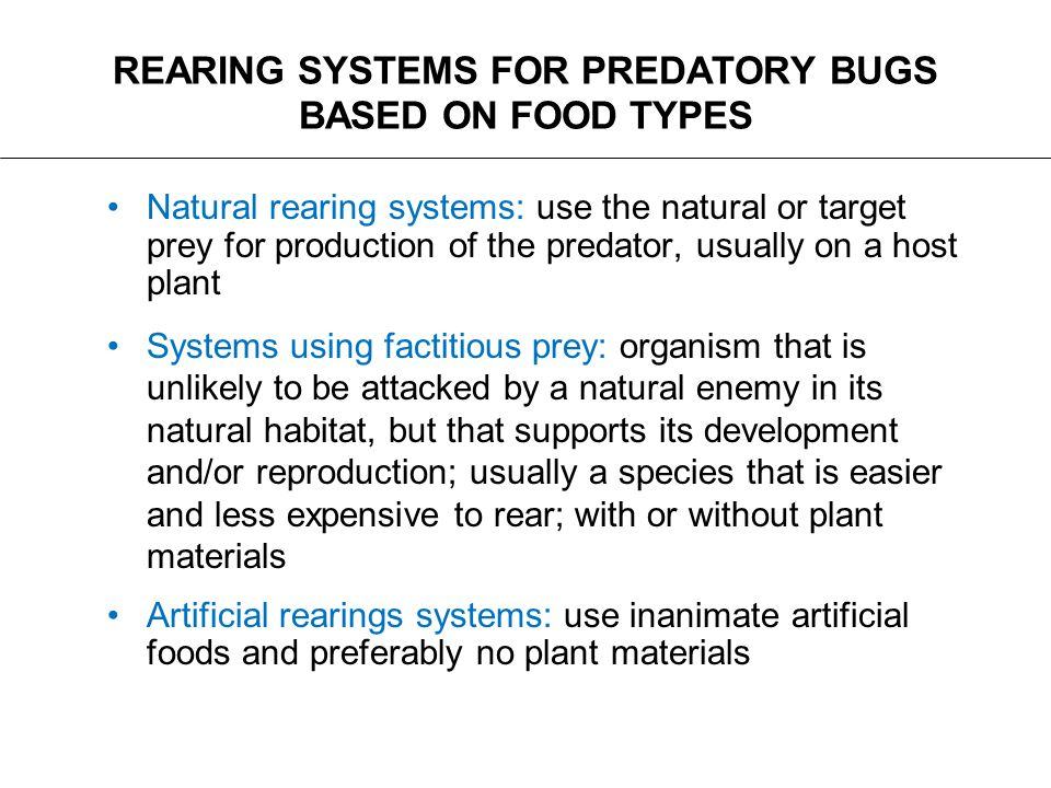 REARING SYSTEMS FOR PREDATORY BUGS BASED ON FOOD TYPES