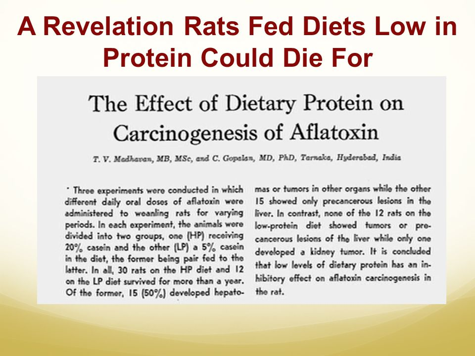 A Revelation Rats Fed Diets Low in Protein Could Die For