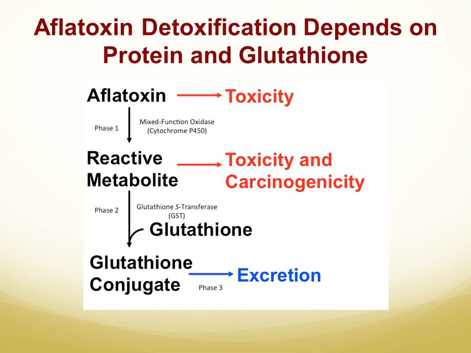 Aflatoxin Detoxification Depends on Protein and Glutathione