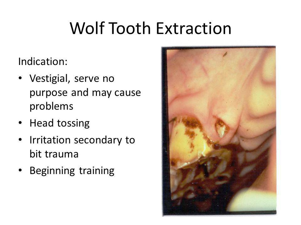 Wolf Tooth Extraction Indication: