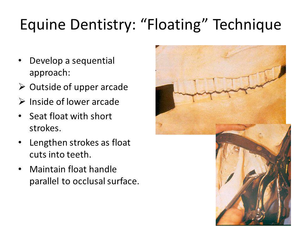 Equine Dentistry: Floating Technique