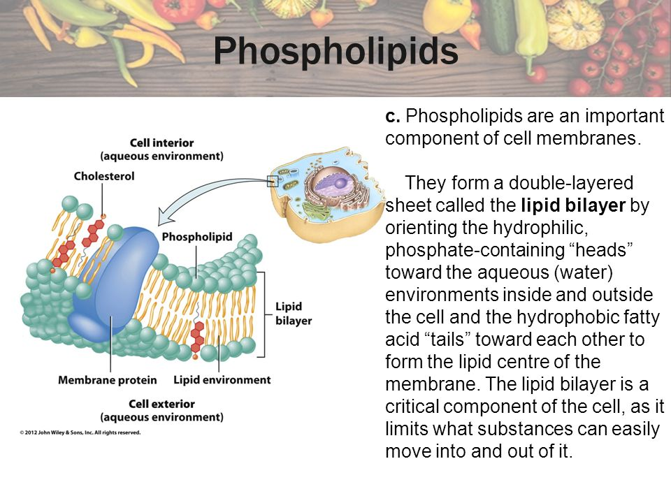 Phospholipids c. Phospholipids are an important component of cell membranes.