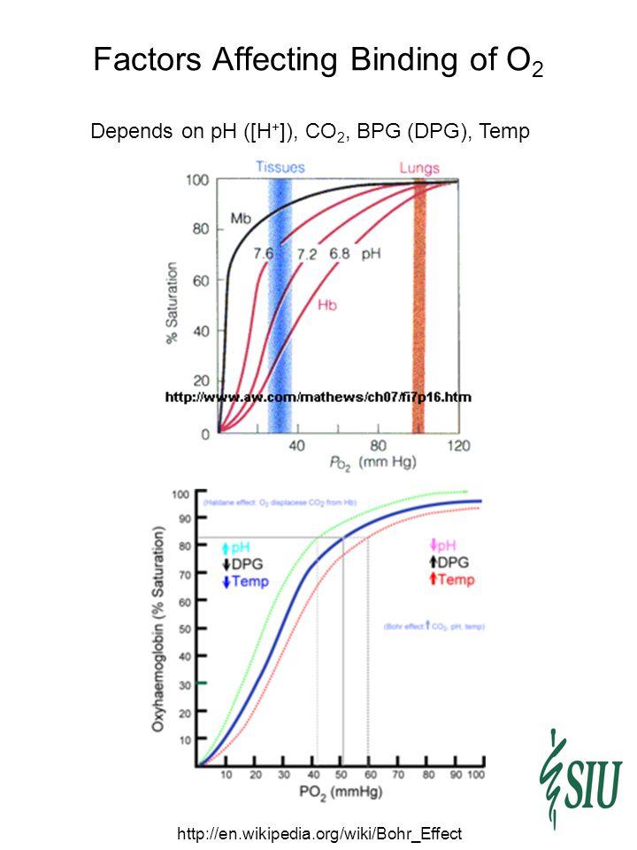 Factors Affecting Binding of O2