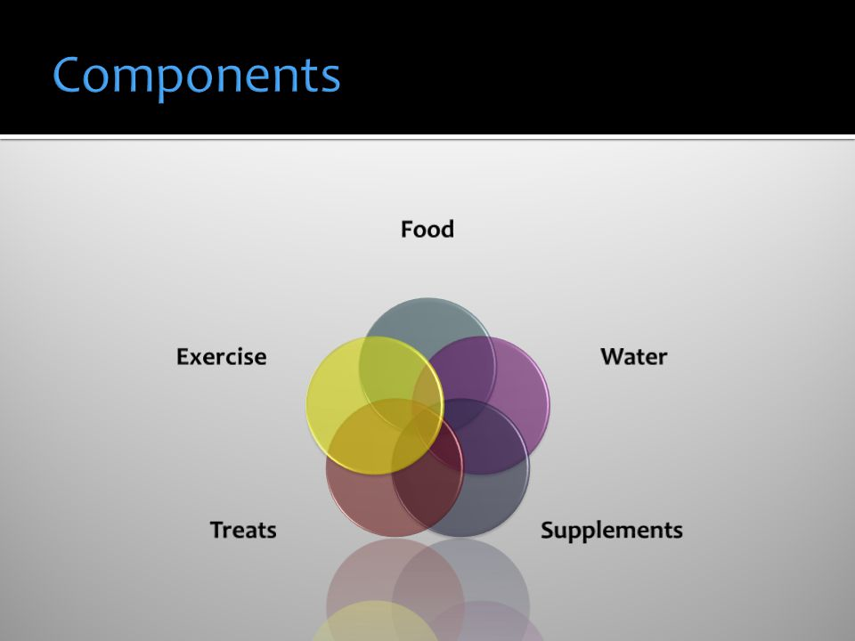 Components Food Water Supplements Treats Exercise