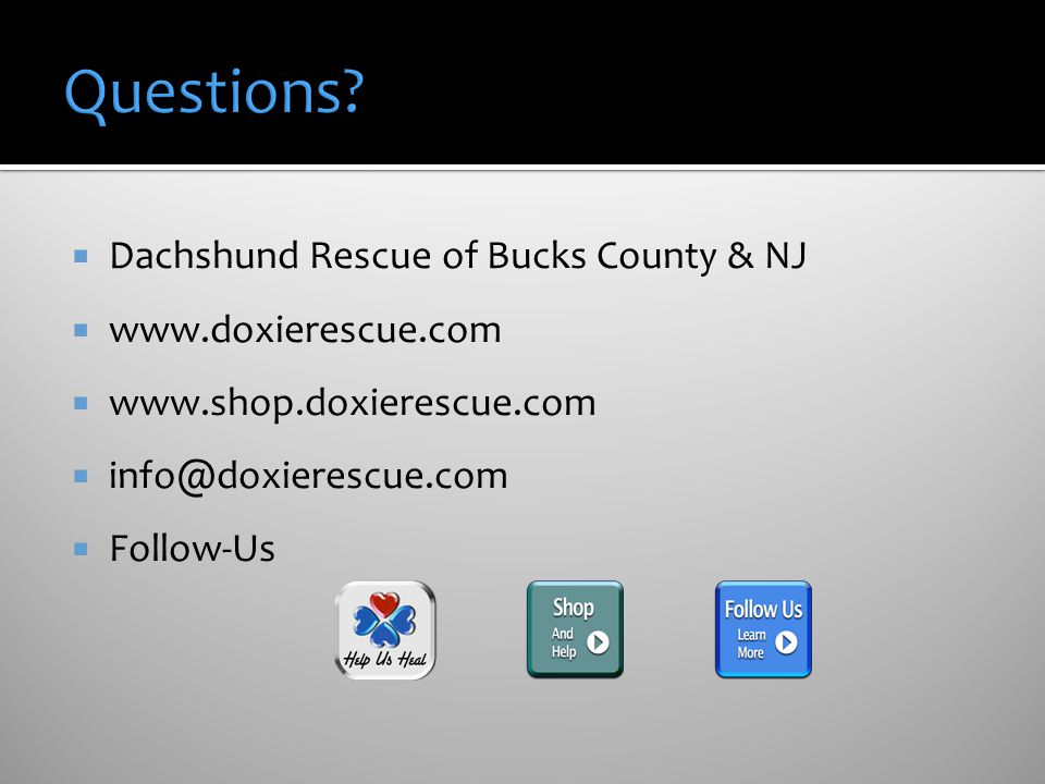 Questions Dachshund Rescue of Bucks County & NJ www.doxierescue.com