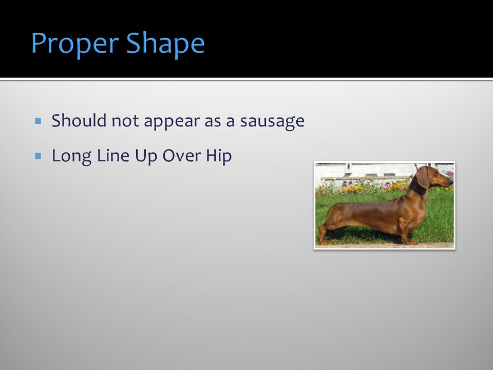 Proper Shape Should not appear as a sausage Long Line Up Over Hip