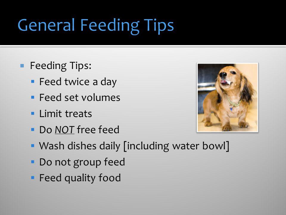 General Feeding Tips Feeding Tips: Feed twice a day Feed set volumes