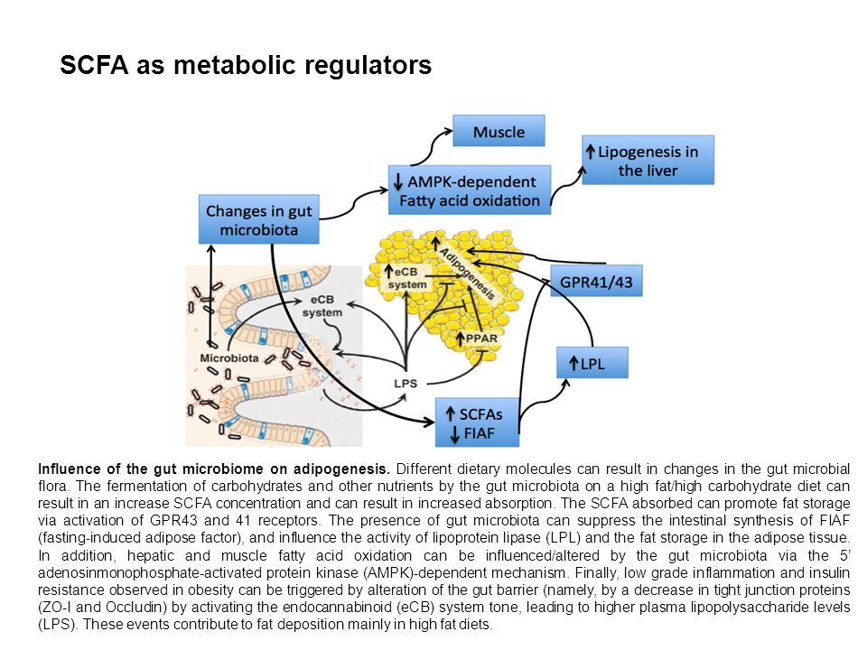 SCFA as metabolic regulators