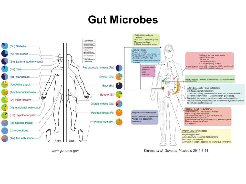 Gut Microbes www.genome.gov Kinross et al. Genome Medicine 2011 3:14
