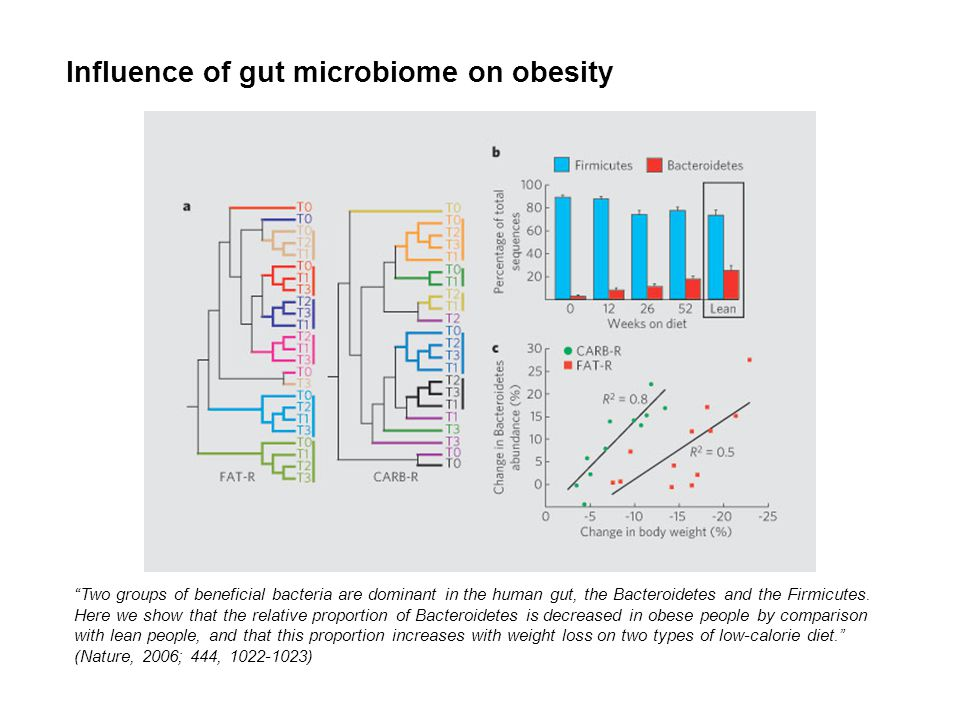 Influence of gut microbiome on obesity