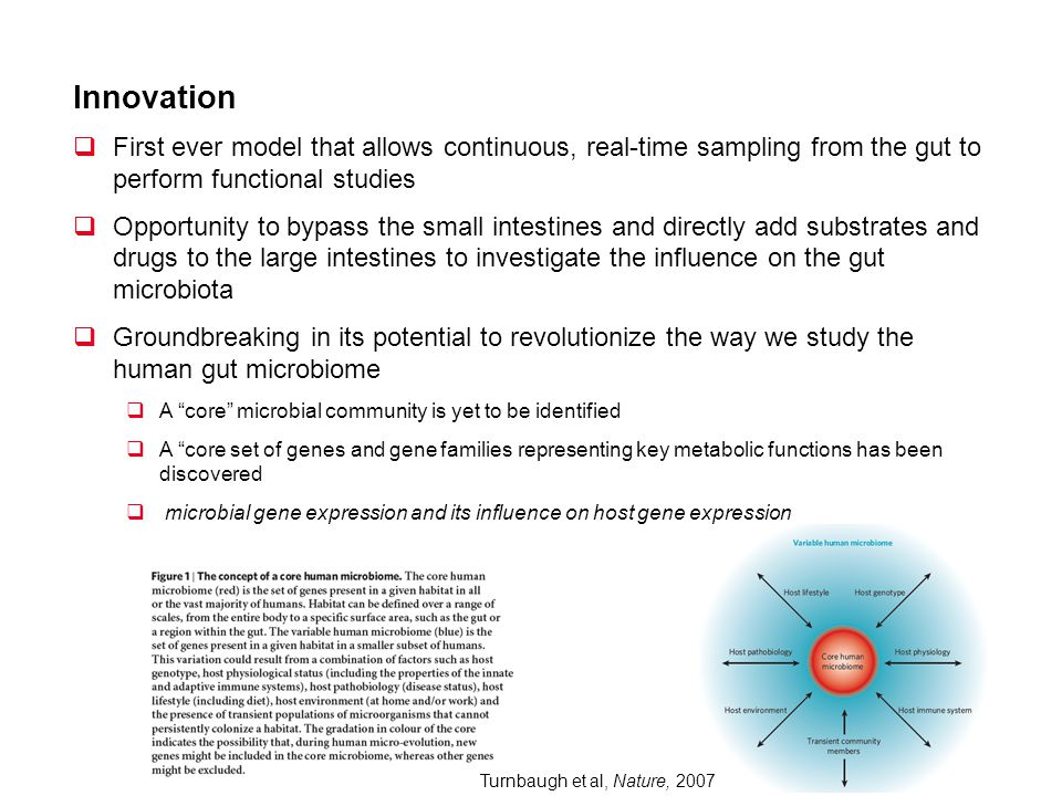 Innovation First ever model that allows continuous, real-time sampling from the gut to perform functional studies.