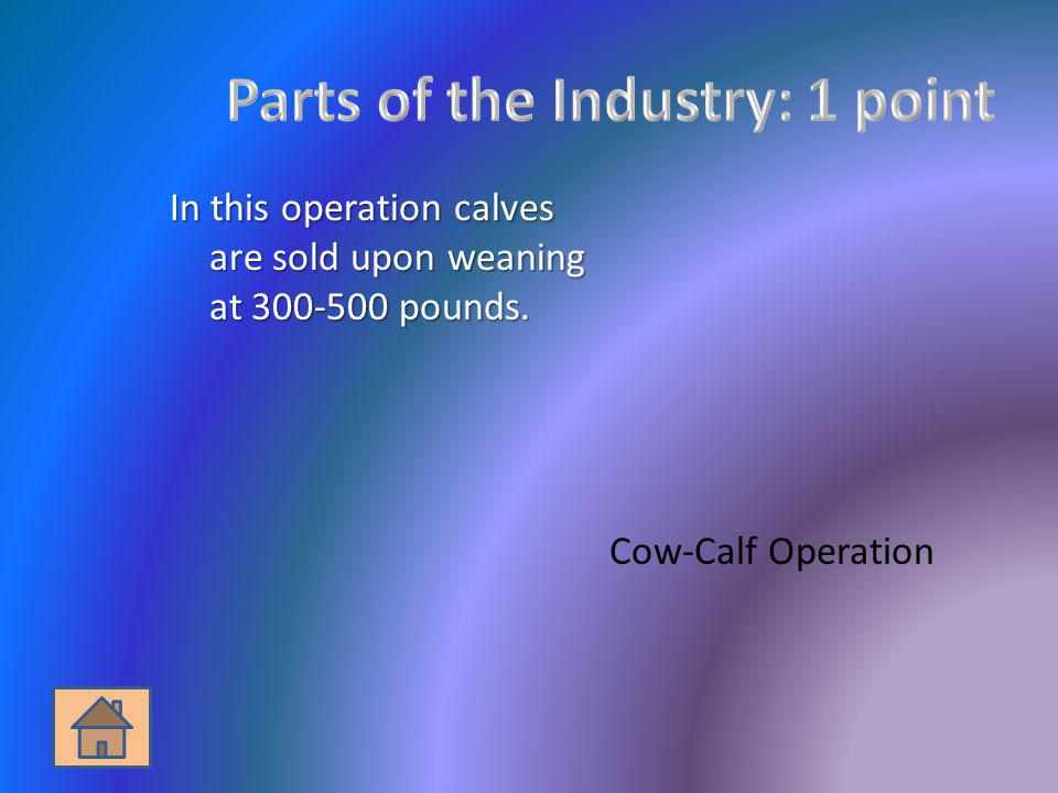 Parts of the Industry: 1 point