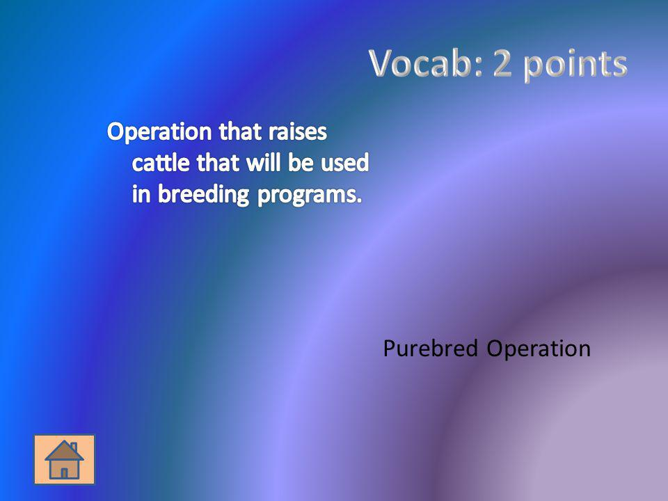 Vocab: 2 points Operation that raises cattle that will be used in breeding programs.