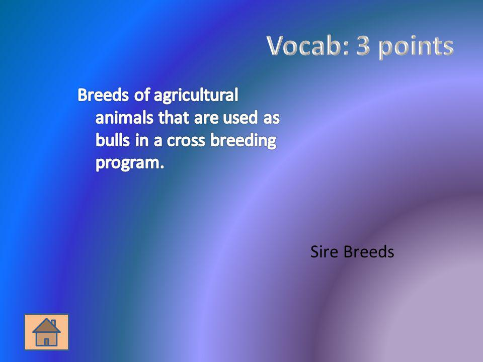 Vocab: 3 points Breeds of agricultural animals that are used as bulls in a cross breeding program.