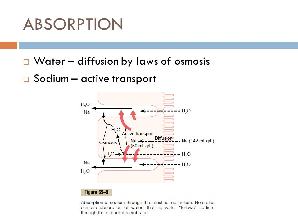 ABSORPTION Water – diffusion by laws of osmosis