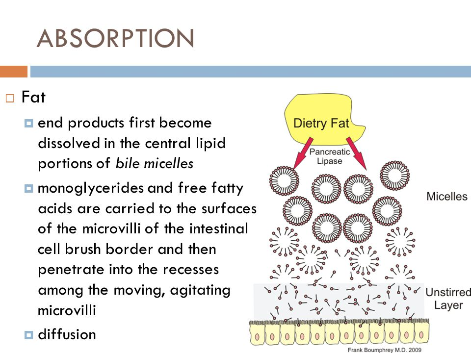 ABSORPTION Fat. end products first become dissolved in the central lipid portions of bile micelles.