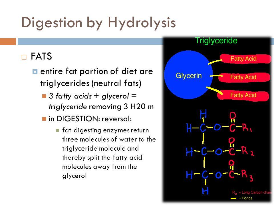 Digestion by Hydrolysis