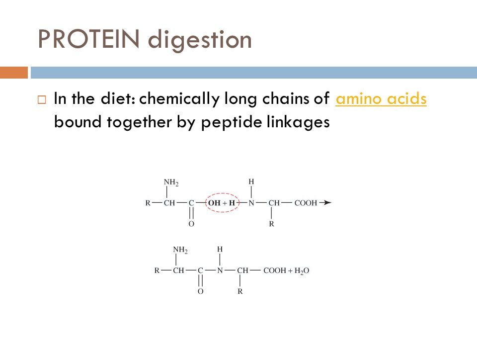 PROTEIN digestion In the diet: chemically long chains of amino acids bound together by peptide linkages.