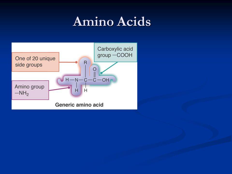 Amino Acids 15