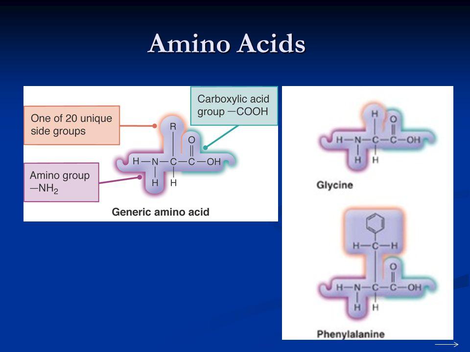 Amino Acids 16