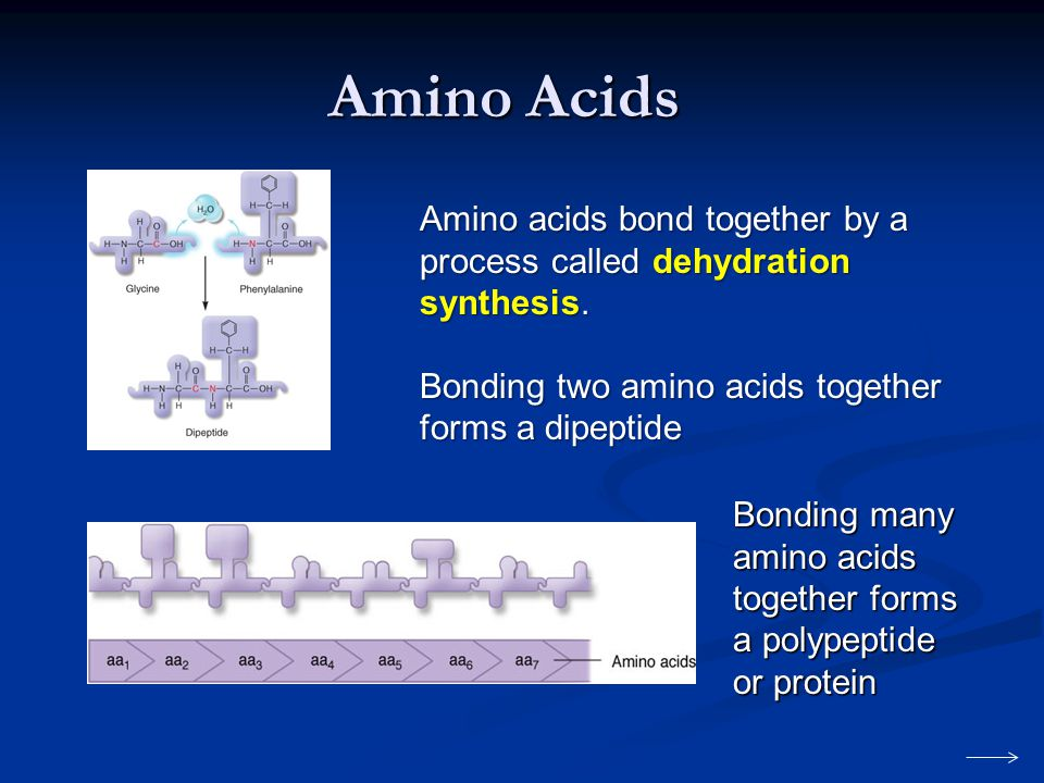 Amino Acids Amino acids bond together by a process called dehydration synthesis. Bonding two amino acids together forms a dipeptide.