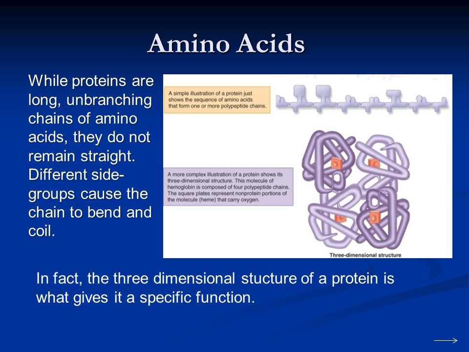 Amino Acids While proteins are long, unbranching chains of amino acids, they do not remain straight.