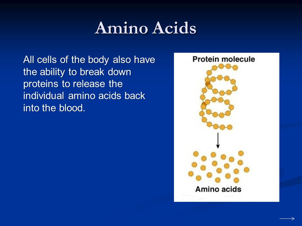 Amino Acids All cells of the body also have the ability to break down proteins to release the individual amino acids back into the blood.