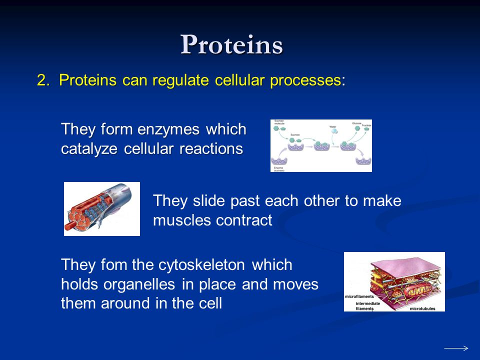 Proteins 2. Proteins can regulate cellular processes: