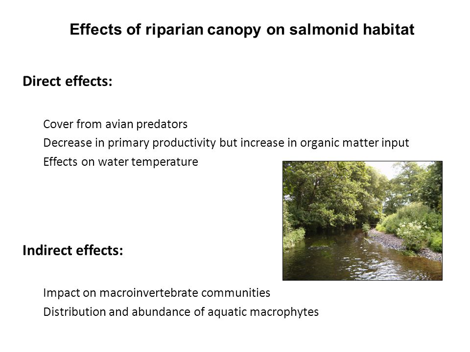 Effects of riparian canopy on salmonid habitat