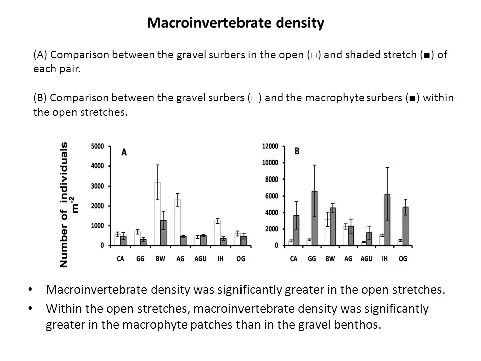 Macroinvertebrate density