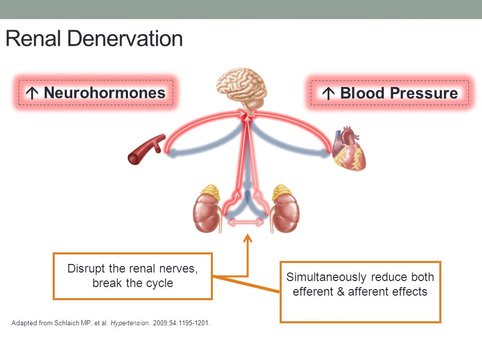 Renal Denervation  Neurohormones  Blood Pressure
