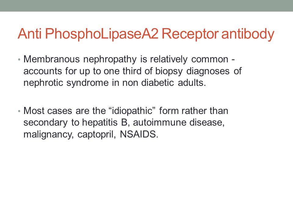 Anti PhosphoLipaseA2 Receptor antibody