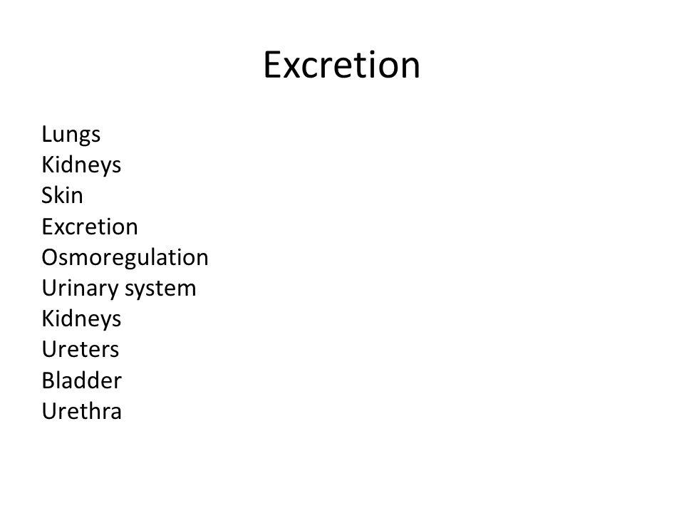 Excretion Lungs Kidneys Skin Excretion Osmoregulation Urinary system Ureters Bladder Urethra