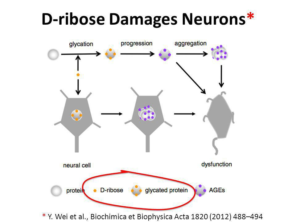 D-ribose Damages Neurons*