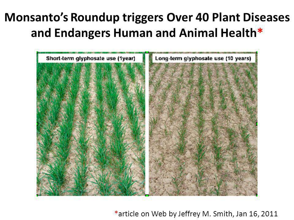 Monsanto's Roundup triggers Over 40 Plant Diseases and Endangers Human and Animal Health*