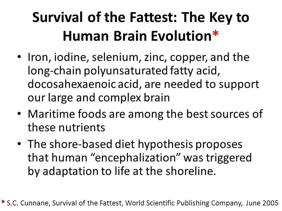 Survival of the Fattest: The Key to Human Brain Evolution*
