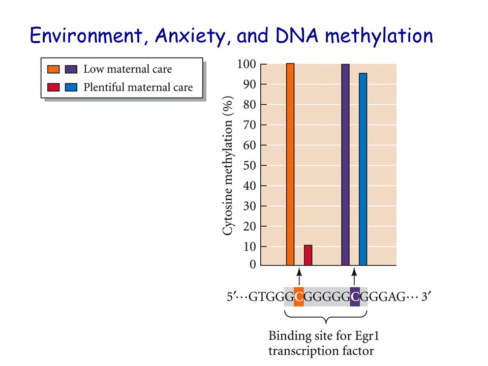 Environment, Anxiety, and DNA methylation