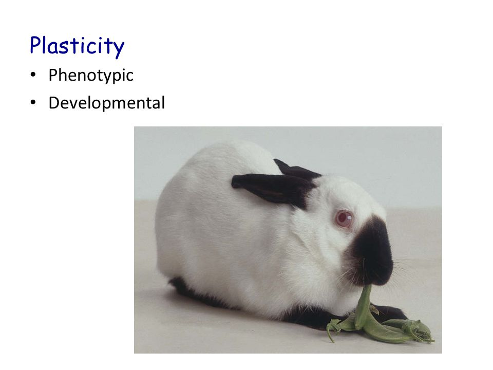 Plasticity Phenotypic Developmental
