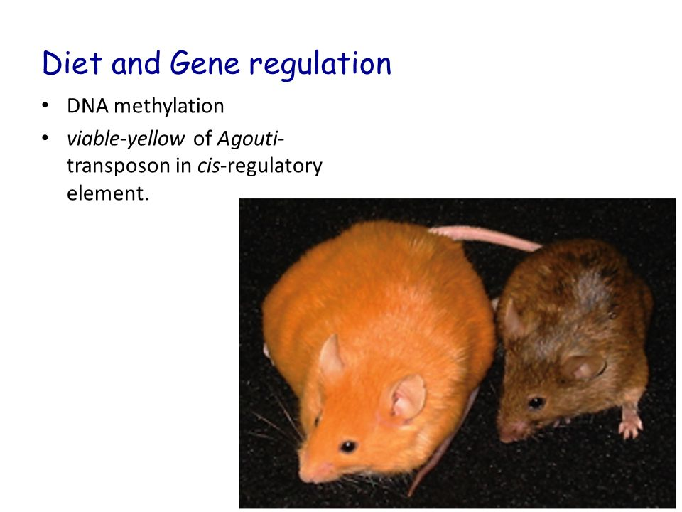 Diet and Gene regulation