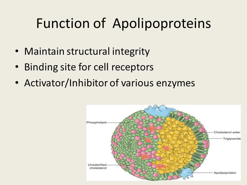 Function of Apolipoproteins