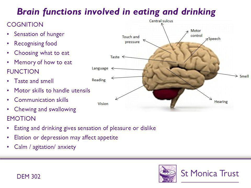 Brain functions involved in eating and drinking