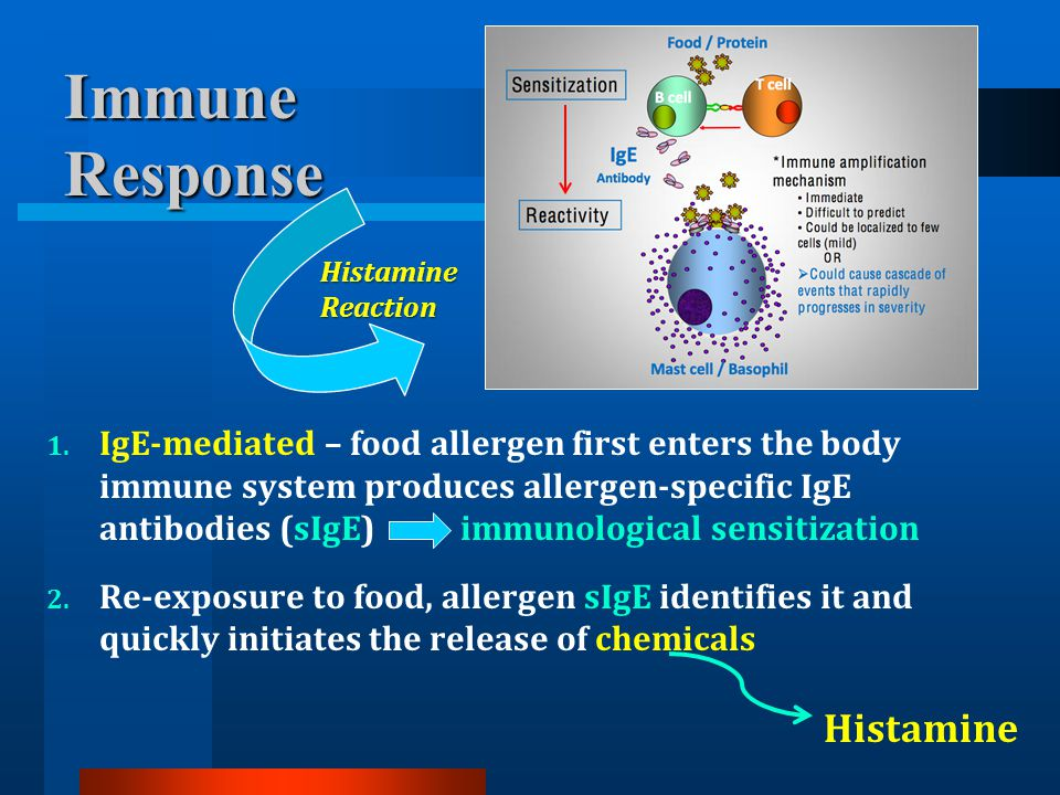 Immune Response. Histamine Reaction. This is a snapshot of what is happening during an. allergic immune response.