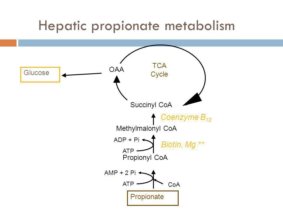 Hepatic propionate metabolism