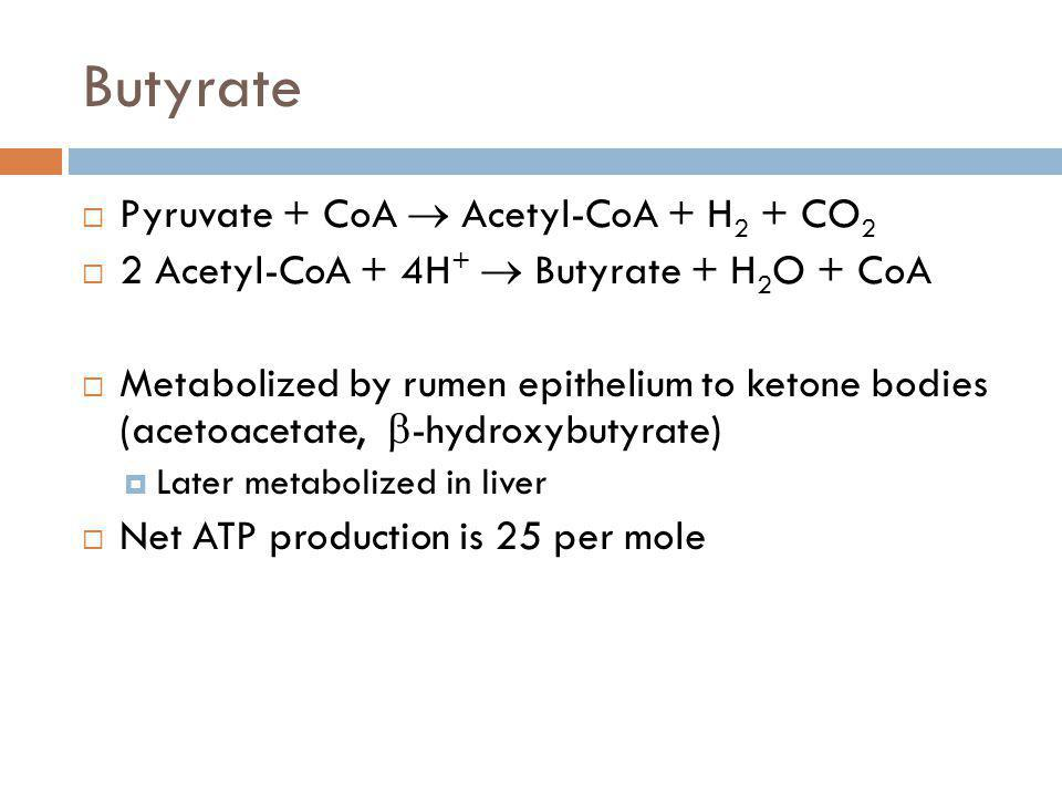 Butyrate Pyruvate + CoA  Acetyl-CoA + H2 + CO2