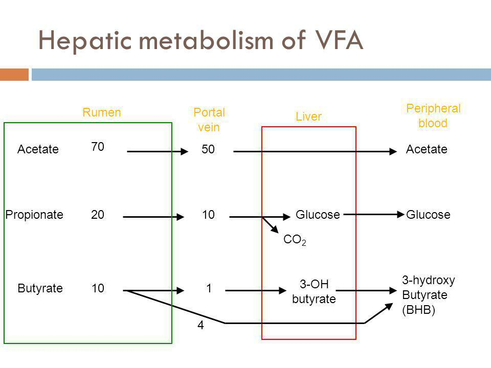 Hepatic metabolism of VFA