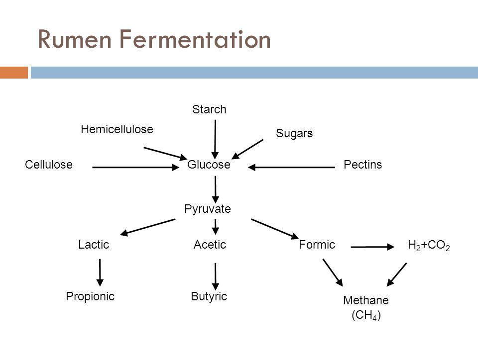 Rumen Fermentation Glucose Pyruvate Hemicellulose Starch Sugars