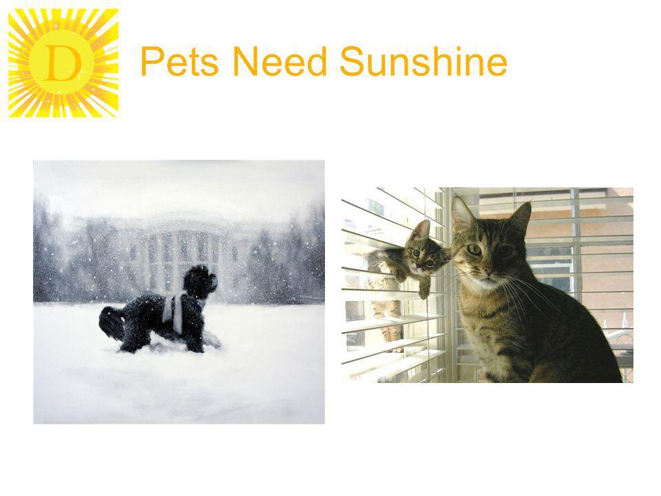 Pets Need Sunshine